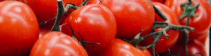 Tomato Revolution: bio, solidale e caporalato free